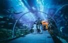 5-Keseruan-yang-Bisa-Dilakukan-di-Jakarta-Aquarium